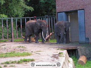 Elefanten im Zoo Rostock