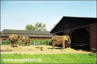 Die Elefanten in Ströhen