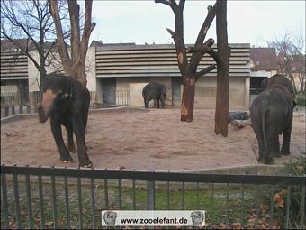 Asiatische Elefanten in Stuttgart