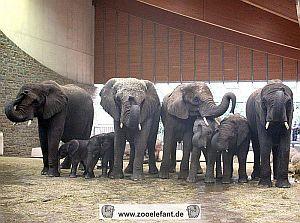 von li. nach re.: Sweni,Tamo, Tika, Sabie, Numbi, Kibo, Bongi und Punda