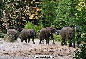 Jogging mit den Elefanten